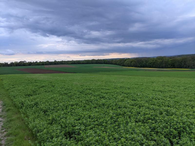 Landwirtschaftliche Flächen, die als Abbaugebiet geplant sind