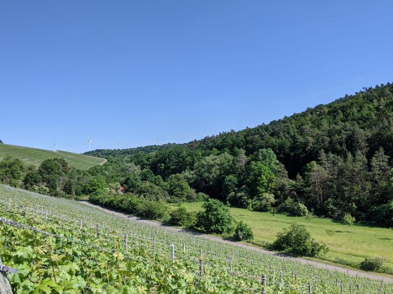 Lindelbach Mischwald und Weinberge